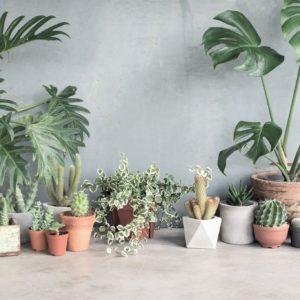 cache_pot_plantes_inspiration_deco_belgique_dco_factory_01